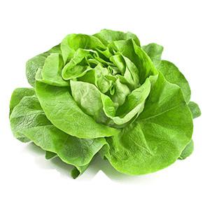 Salat: Kopfsalat Neckarriesen