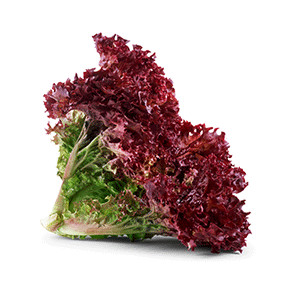Salat: Pflücksalat Lollo Rossa