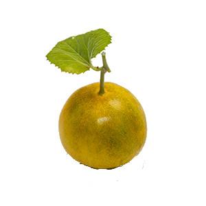 Gurke: Zitronengurke Lemon